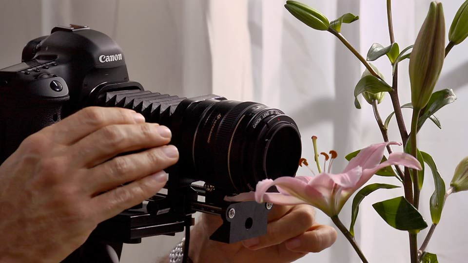 Photography Foundations: Macro and Close-Up