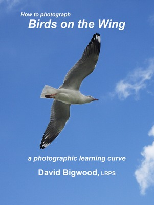 How to Photograph Birds on the Wing