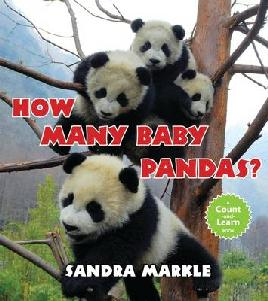 Book cover of How many baby pandas?