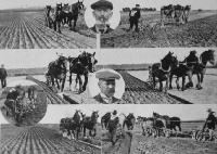 The Leeston Ploughing Match